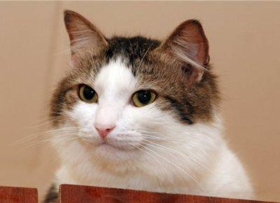 ネコの知能ってどんなもんやろか?
