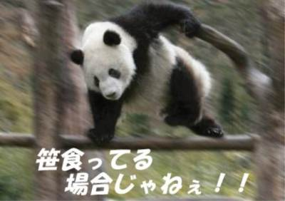 中国人 イヌをパンダに魔改造 ※画像・GIF動画※ / 中国の流行