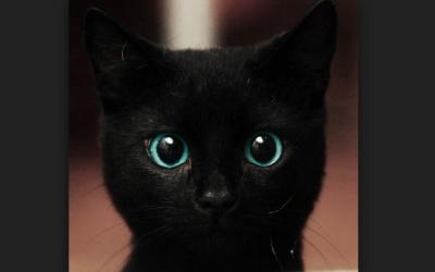 世界で最も黒い物質のスプレーが開発される ※画像※