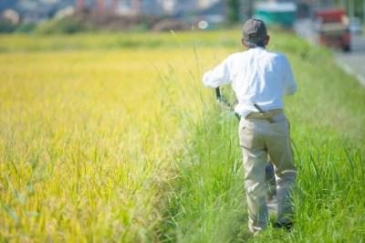 日本の農業を変えたくて10年頑張ってきたがもう限界かもしれない