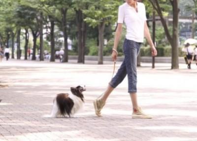 「わが家の犬です」変態マダム激写される 四つん這い男性の首にリードを付け街を散歩