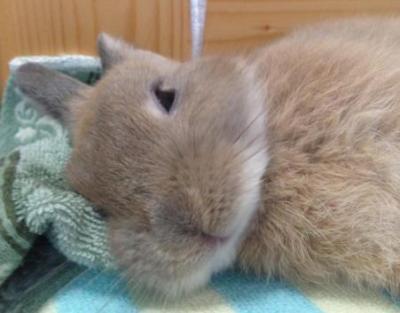 【画像】この子より可愛いウサギちゃん見た事あんの?