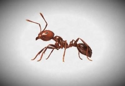 蟻の研究者がネット上の『ヒアリに関する噂』を否定