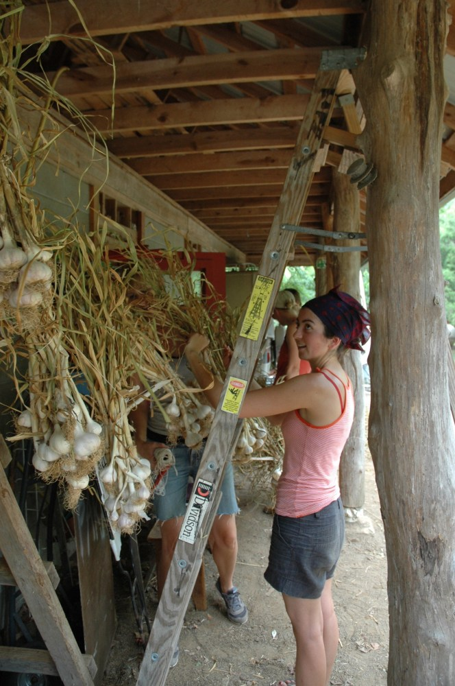 Hanging Garlic (3/4)