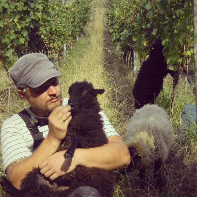 Postharvest cuddling harvest2016 Read more rarr