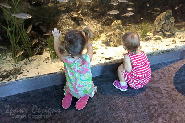 Project 52 Photos: Week 33 – Aquarium