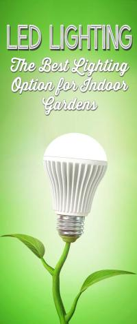 LED Grow Lights: The Best Choice for Indoor Plants & Gardens