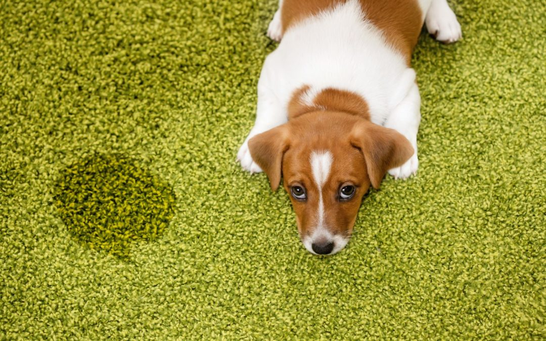 Best Carpet Cleaner For Pets Shoppers Guide Pet Territory