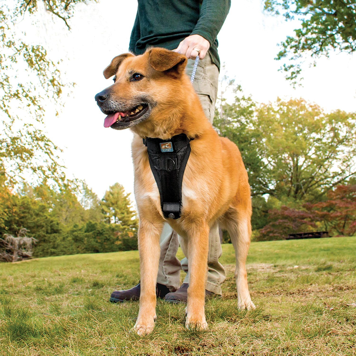 Nifty Dog Harness Dog Harness Options Dogs Reddit Your Dog Pet Territory Harness Dogs That Chew Harness bark post Best Harness For Dogs