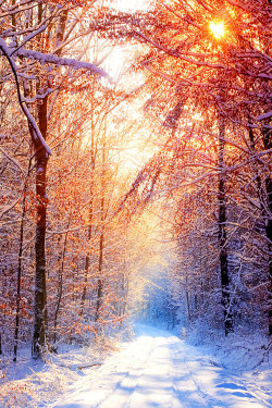 Christmas Wallpaper Snow Falling Landscape Trees Forest California Pathway Woods Vertical