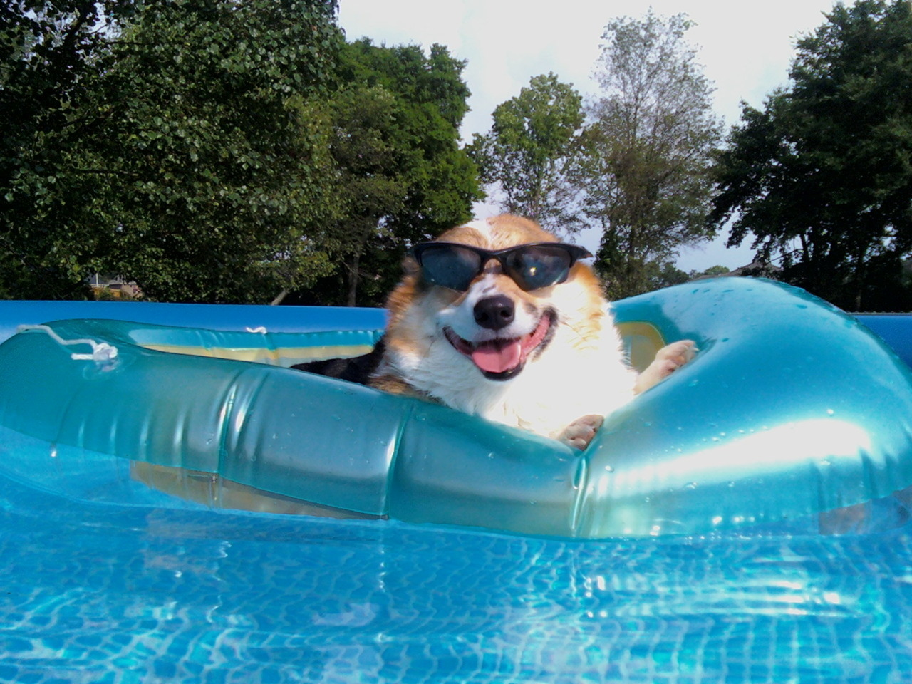 Cash Pool O Que Significa Dog Pool Sunglasses Chill Dogs Chillin Thebsdboys