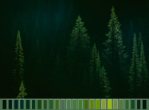 Quotes Wallpaper Hd Landscape Trees Green Colors Forest Transparent Color