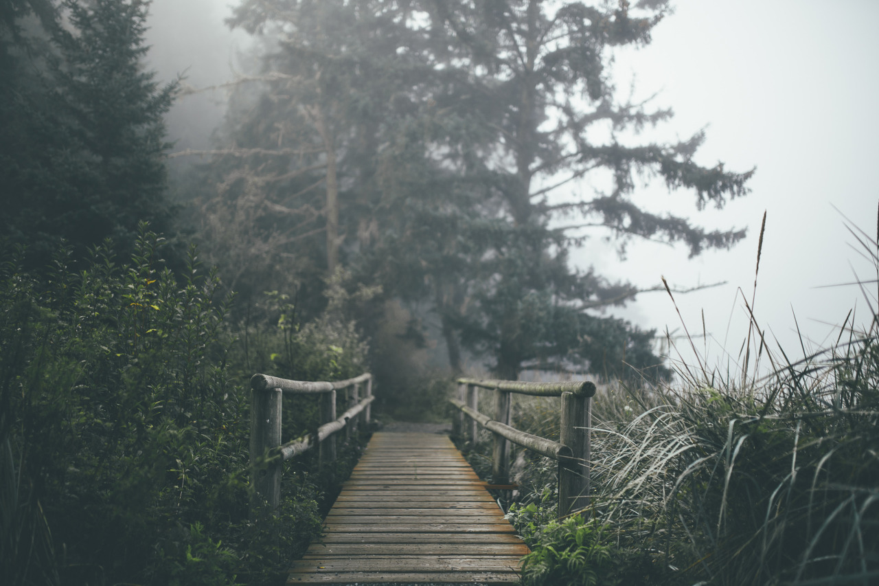 Background Wallpaper Hd Fall Fog Vintage Landscape Nature Forest Fog Trail Pacific