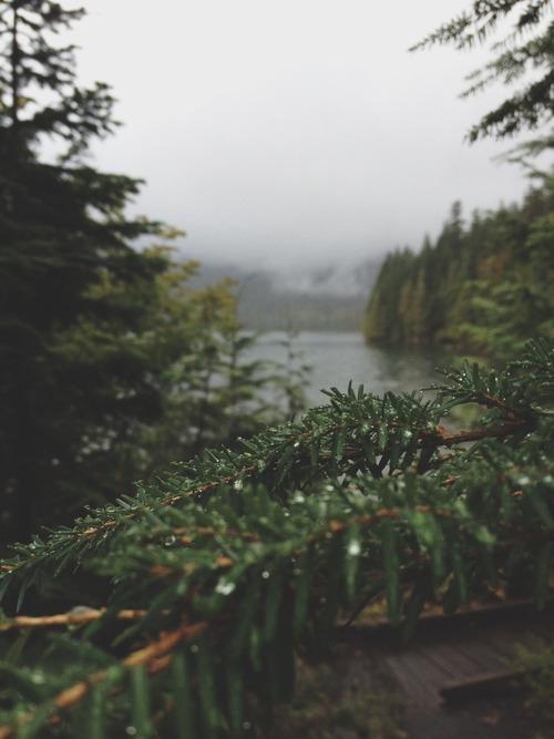 Gravity Falls Phone Wallpaper Winter Hipster Vintage Landscape Inspiration Trees Indie