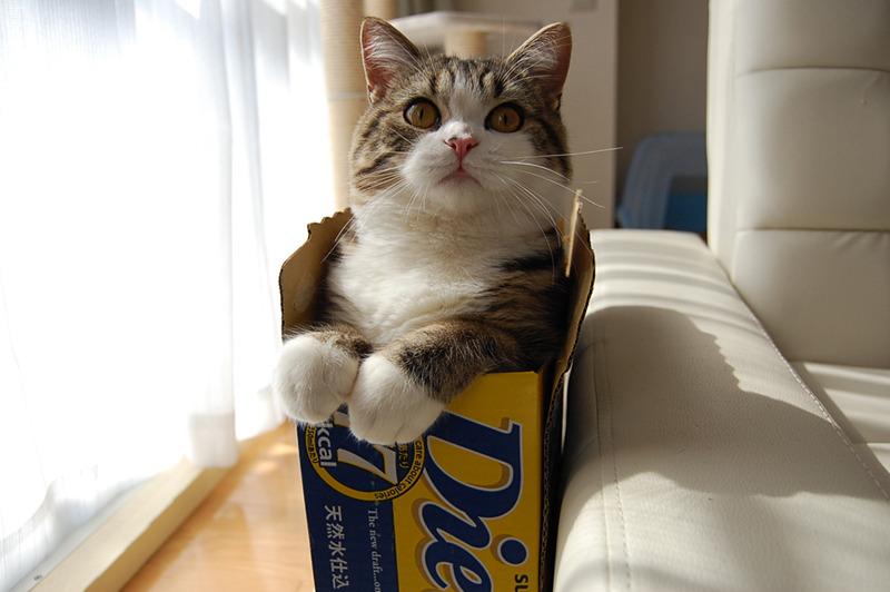 Review Of My Cat Cat Maru Owner Mugumogu Ed Note