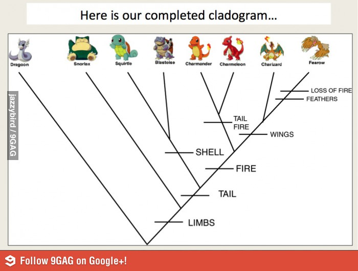 cladogram venn diagram