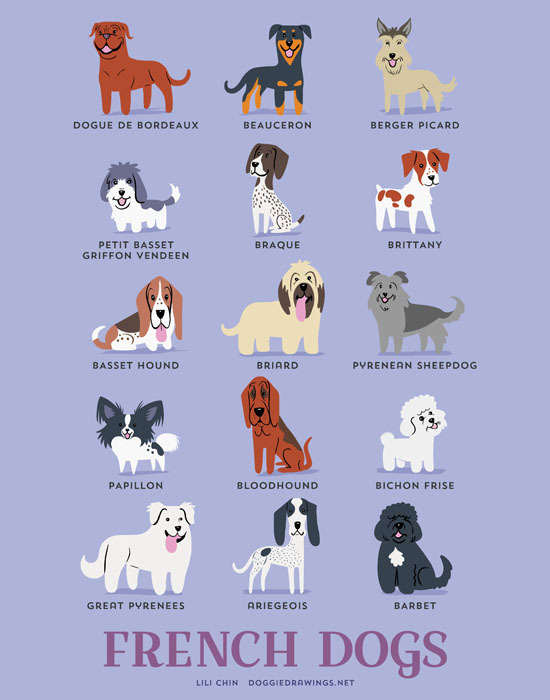 From FRANCE: Dogue de Bordeaux, Beauceron, Berger Picard, Petit Basset Griffon Vendeen, Braque Francais, Brittany, Basset Hound, Briard, Pyrenean Sheepdog, Papillon, Bloodhound, Bichon Frise, Great Pyrenees, Ariegeois, Barbet.
