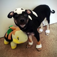 pokemon puppy Halloween kirby Turtwig dog costume houndour
