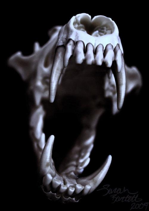 Inked Girl Wallpaper Wolf Skull Tumblr