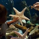 Tips for Spring Break from Georgia Aquarium