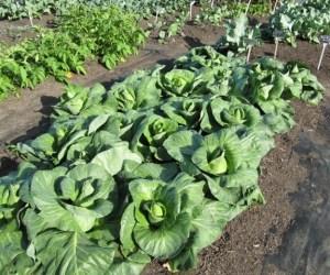 171.  Barrington Smart Farm Fall Harvest Celebration