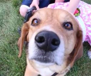 Post - Barrington Park District Dog Show - Featured