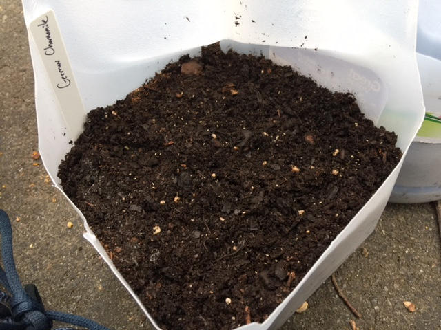 Winter Sowing - Adding Seeds