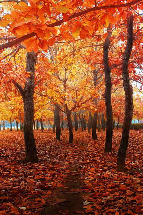 Cozy Fall Hd Wallpaper Tree Trees Fall Nature Outdoors Scenery Autumn Seasonal