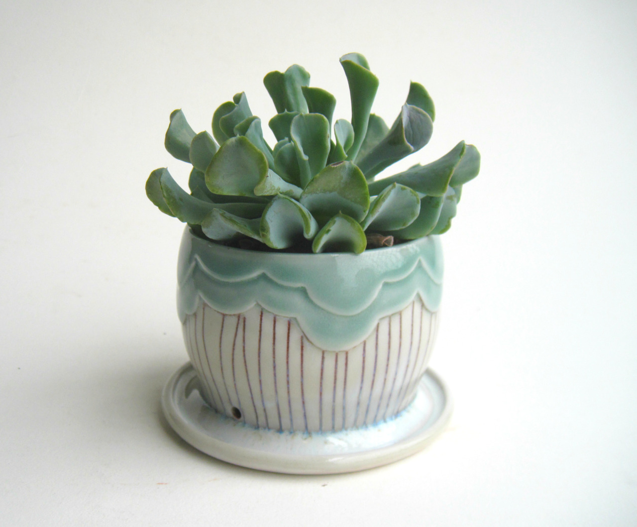 Cactus Planters Pottery Art Seattle Artist Rain Clouds Crystal Gold Plants