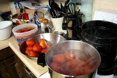 Prepping tomatoes for homemade salsa