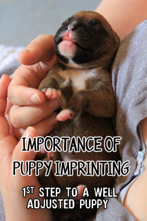 IMG_0386_puppyimprinting