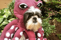 8 Ridiculous Dog Halloween Costumes You Need To Buy Right ...