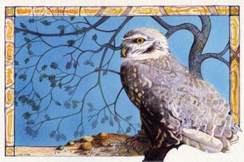 "Burrowing Owl #2 12"" x 7.75"""