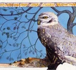 """Burrowing Owl #2 12"""" x 7.75"""""""