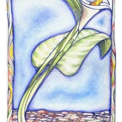 "Calla-Graphic  7"" x 10"""