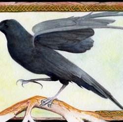 """Raven 2 10.25"""" x 7.25"""""""