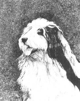 """Sheep Dog 11"""" x  14"""""""