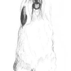 sheep dog1