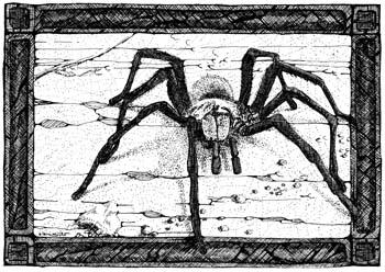 """Tarantula 10"""" x 7"""""""