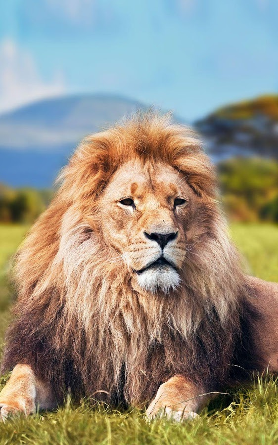Lion Live Wallpaper Iphone X Lion Animation Wallpaper Hd For Iphone 2019 3d Iphone