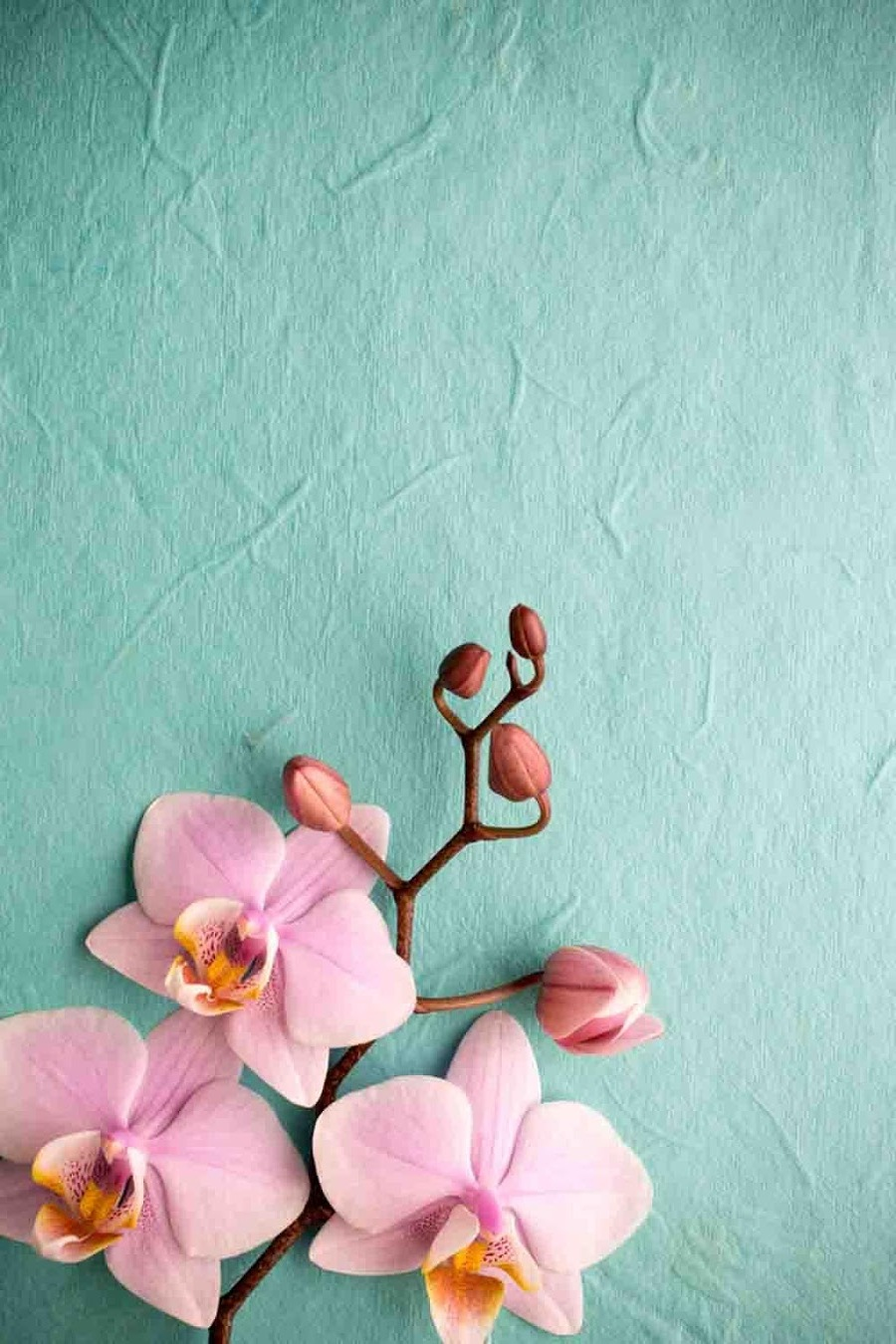 Cute Background Wallpapers For Whatsapp Pink Orchid Wallpaper Iphone 3d Iphone Wallpaper