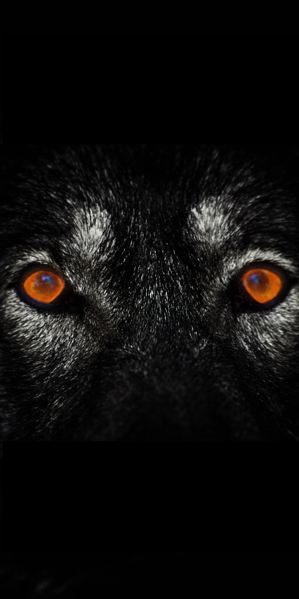 Wallpaper 4k For Phone Iphone X Wolf Eyes Dark Iphone Wallpaper 3d Iphone Wallpaper