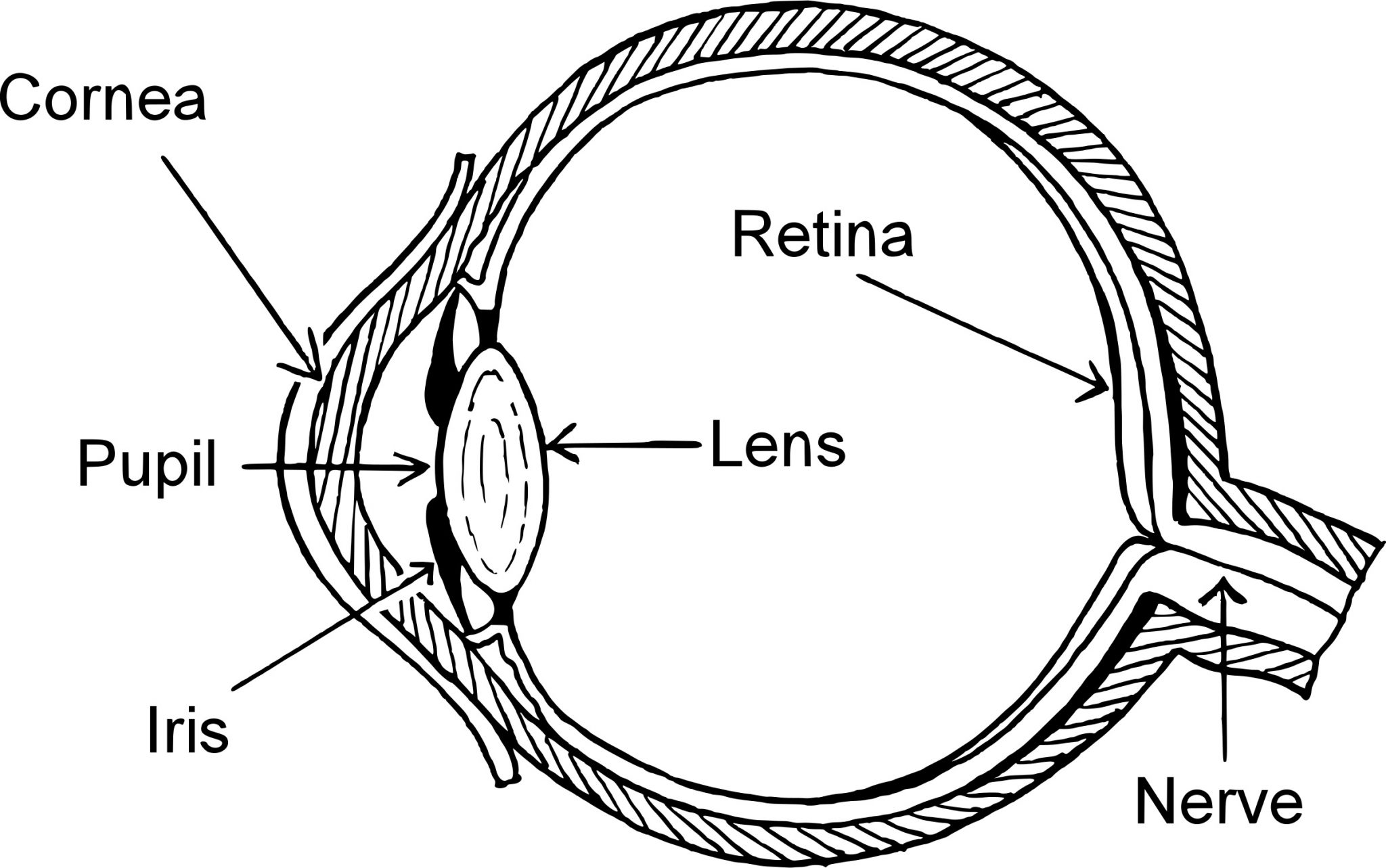 simple human eye diagram how our eyes work