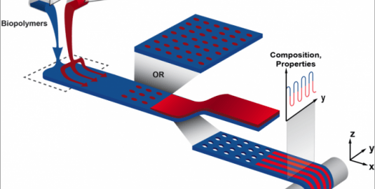 PrintAlive BioPrints Living 3d Skin - Cell Layering On Substrate