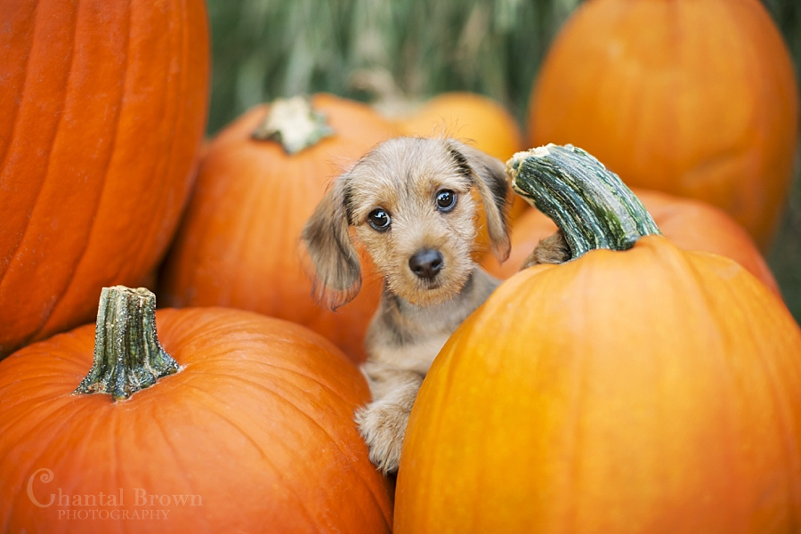 Cute Little Kitten Desktop Wallpapers 7 Wonderful Things You Can Do With Your Dog This Fall