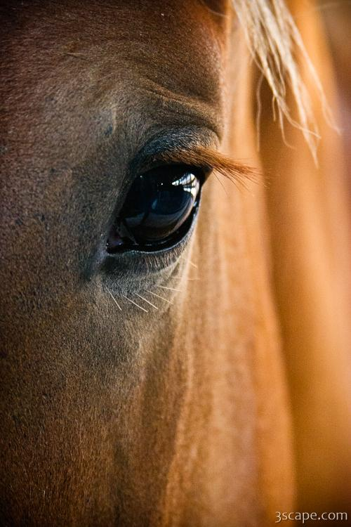 Freedom Wallpaper Quotes Horse Eye Photograph Landscape Amp Travel Photography For