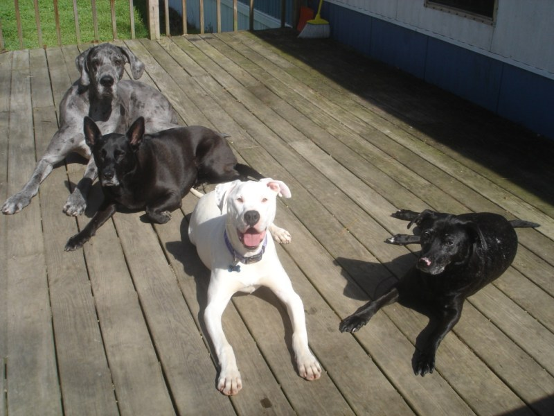 Large Of Low Energy Dogs