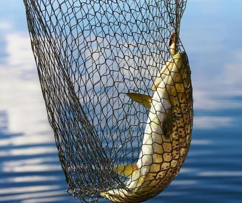 Fish Net - Manufacturer from Jaipur