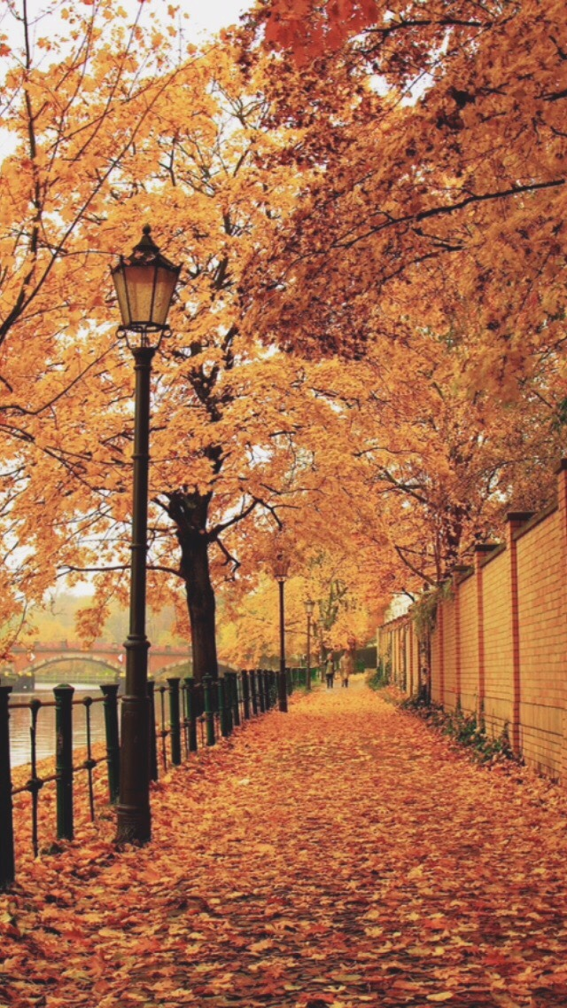 Fall Leaves Iphone 5 Wallpaper Photography Tumblr Landscape Wallpaper Nature Paris Autumn