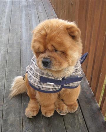 Cute Girl N Boy Wallpapers Sweater Puppies Tumblr